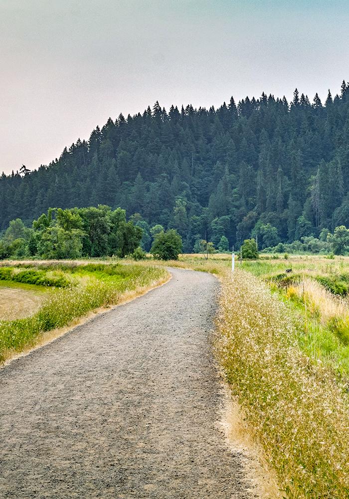Brookhollow Trail